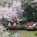 【神社に近い】都内で神前式ができる人気結婚式会場ベスト5