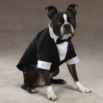 おーい新郎さん!あなたが結婚式で着る衣装の種類はコレですよ?